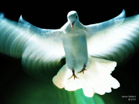 dove_peacemlt1